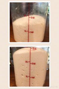 Dough Rising Bucket